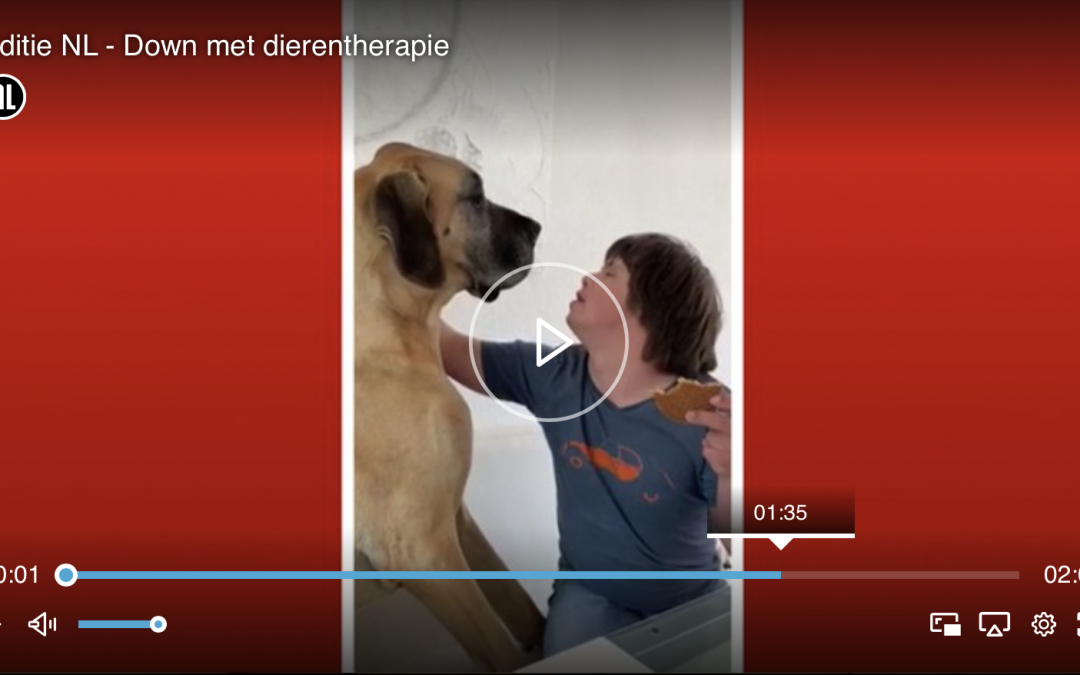 Dierentherapie in RTL Nieuws